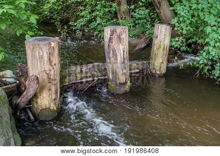 A view of three posts in a stream in Normandy Park Washington.