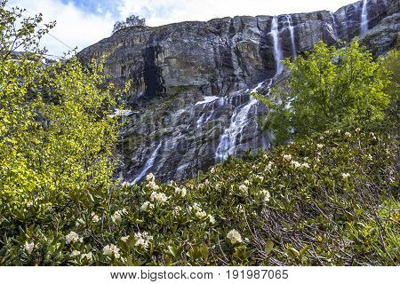 Picturesque glade with flowers. A beautiful view of powerful falls in the mountain gorge, a picturesque landscape, the wild nature of the North Caucasus