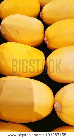 Group of yellow and fresh spaghetti squash