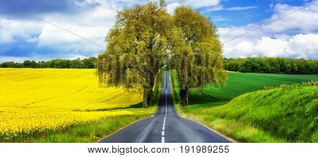 beautiful countryside of France. Blooming yellow fields in may. beuty in nature