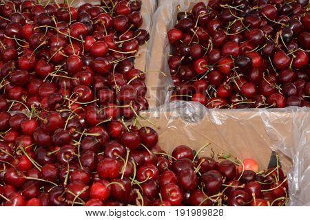 Bins of Red Bing Cherries at farmer's market