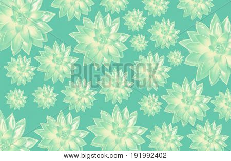 pattern of succulents