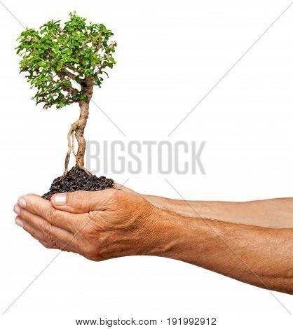 Holding human tree hands copy space studio shot rural scene
