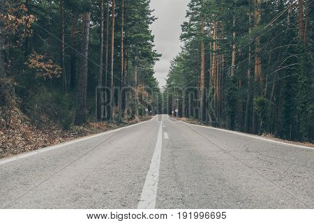 Country road trough the forest. High mountain road. Forest landscape. Roadtrip trough the woods. Road in the forest. Scenic road trough the trees.