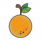 Orange citric fruit icon vector illustration graphic design poster