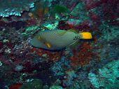Tropical fish. Andaman sea. Similan islands park poster