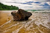 Big snag on the sand tropical beach in bad weather. Phuket island. Andaman sea. Kingdom Thailand poster