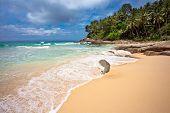 On the sand tropical beach. Andaman sea. Phuket island. Kingdom Thailand poster