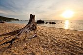 The old tree stump on a tropical beach in the glow of the setting sun poster