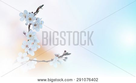 Beautiful Blue Nature Background.colorful Artistic Wallpaper.natural Macro Photography.beauty In Nat