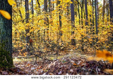 Autumn Forest. Non Urban Scene. Autumn Forest. Non Urban Scene.