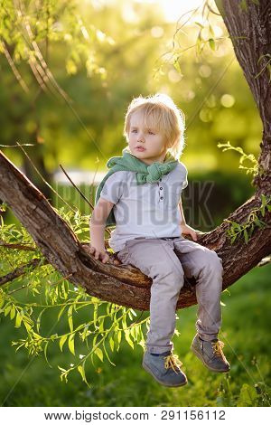 Little Boy Is Sitting On A Branch Of Tree And Is Dreaming. Child's Games. Active Family Time On Natu