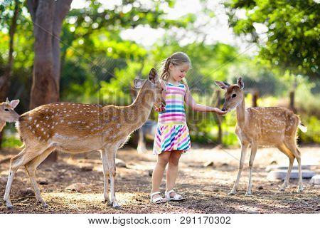 Child Feeding Wild Deer At Zoo. Kids Feed Animals.