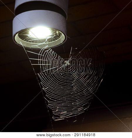 Cobweb On A Lantern At Night. Arachnophobia.