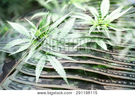 Marijuana Industry Profits High Quality Stock Photo