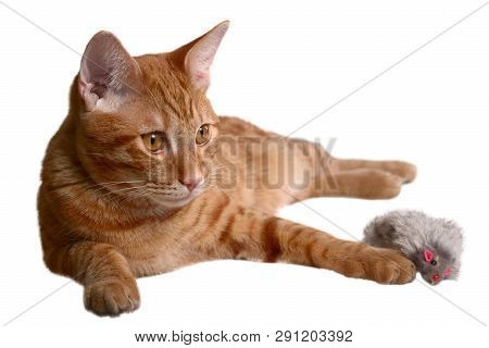 Ginger Kitten Laying With A Gray Fur Mouse Toy