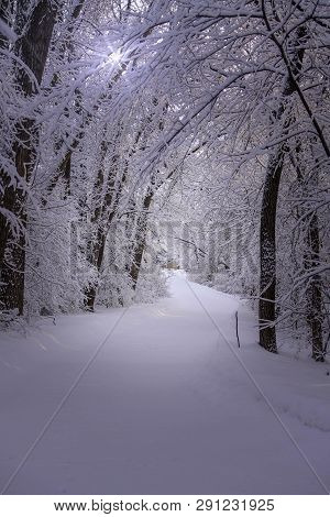 Beautiful Walking Trail Through A Snowy Forest