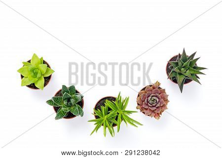 Little Potted Succulent Plants Isolated On White Background. Modern Decor.
