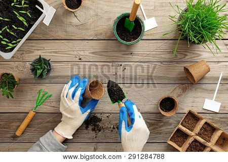 Hands Of Gardener Puts Seed In Peat Container With Soil, Planting A Plant With Gardening Tools. Gard