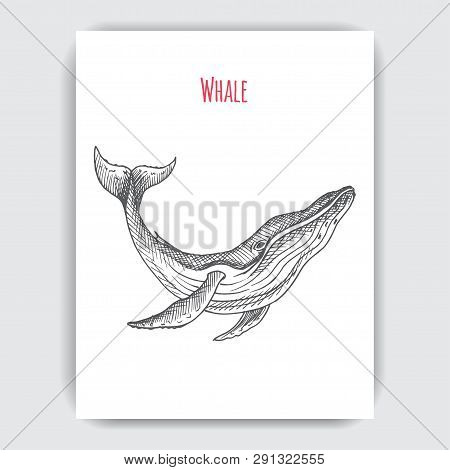 Hand Drawn Vector Sketch Whale. Tattoo With Humpback Whale.