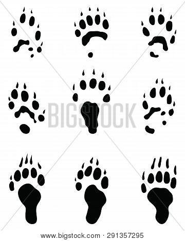 Black Footprints Of Polecat On A White Background