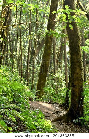 Evergreen Forest Trees Environment, Ecology Of Green Tree In Tropical Forest, Good Environment Conce