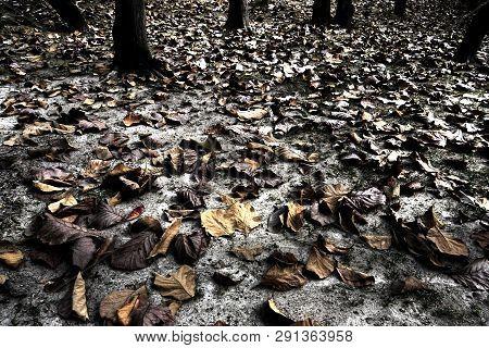 Underexposure Low Key Image Of Fallen Teak Leaves On The Ground In Autumn Season, High Contrast Phot
