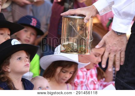 3/22/2019 San Juan Capistrano, CA: Kids and People of all ages laughed and smiled as they enjoyed the Sixth Annual Frog Jumping Contest in San Juan Capistrano California. Held at Mission Grill.