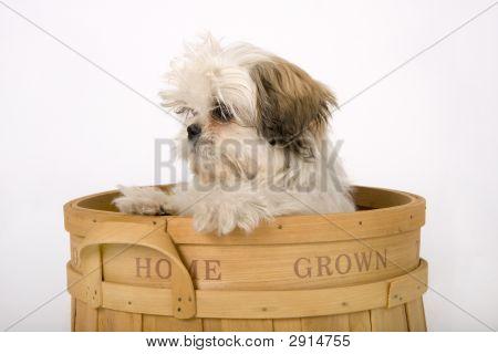 Home Grown Puppy