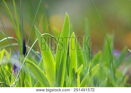 Close up shot of flora fauna