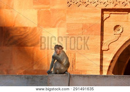 Monkey on the historic fort wall