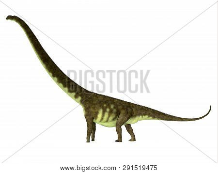 Mamenchisaurus Hochuanensis Dinosaur Side Profile 3d Illustration - Mamenchisaurus Hochuanensis Was