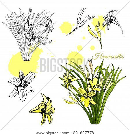 Set With Monochrome And Colored Sketch Of Hemerocallis Flowers Bouquets And Abstract Spots. Hand Dra