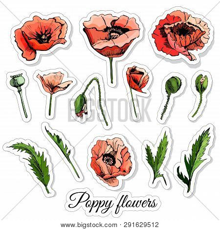 Set Of Stickers Of Hand Drawn Colored  Sketch With Poppy Flowers And  Leaves  Isolated On White  Bac