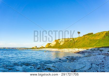 Headland Beyond Bay With One Tree At Sunrise On Headland At Kaikoura South Island New Zealand