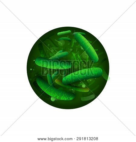 Probiotics And Prebiotics. Normal Gram-positive Anaerobic Flora. Editable Vector Illustration With L