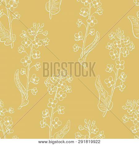 Rape Flower Graphic Color Seamless Pattern Background Sketch Illustration Vector