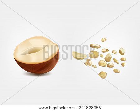 Ripe And Raw Half Hazelnut, Ground Nut Front View 3d Realistic Vector Isolated On White Background.