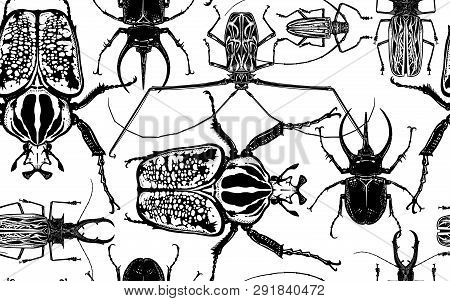 Various Beetles On White Background. Beetle Rhino, Harlequin, Goliath And Others Insect. Seamless Pa