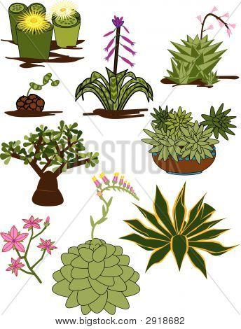 Cactus Clips Succulents