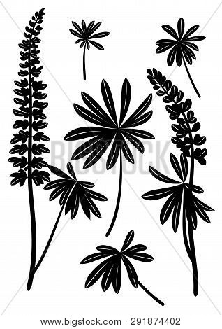 Set Of Plant Pictograms, Lupine Leaves And Flowers, Black On White. Vector
