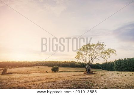 Beautiful Sunset Over Dry Fields In The Summer With Pine Tree Forest Around