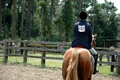Equestrian Rider on a Horse in a Round Pen. poster