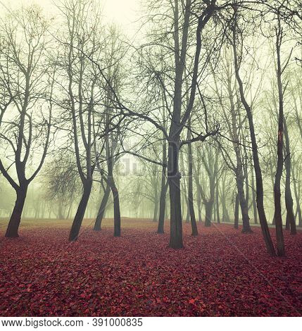 Fall November landscape. Fall in the mysterious foggy city park. Diffusion filter applied. Fall landscape with red fallen leaves, fall park in foggy fall day. Fall foggy scene