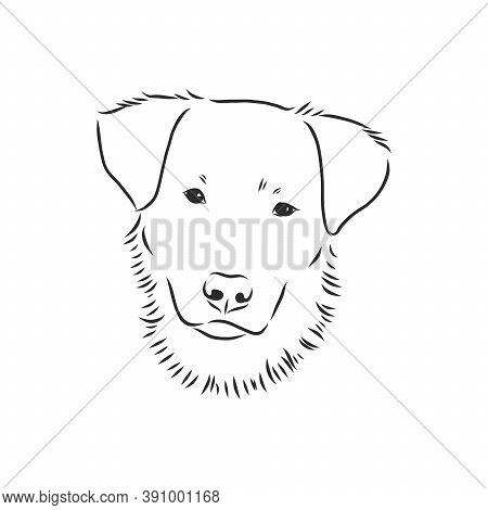 The Old Poor Mangy Dog Look Sad And Lonely., Mongrel, Abandoned Dog, Vector Sketch Illustration