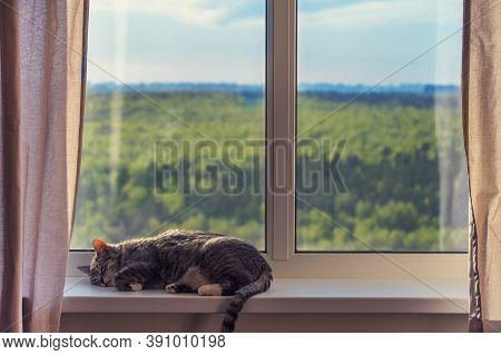 A Cat Sleeps By A Window With Green Trees In A Summer Forest. Stay Home Because Of The Coronavirus E