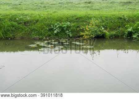Murky Riverside Water With Green Lush Long Water Reed Grass With Copyspace