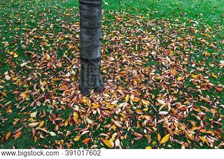 autumn leaves of tree in the park