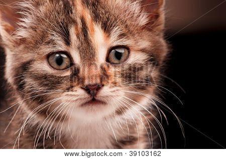 Cute little kitten is looking straight into camera