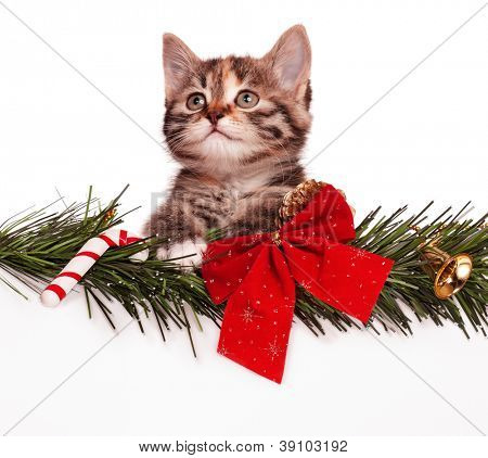 Portrait of cute christmas kitten with empty board on white background